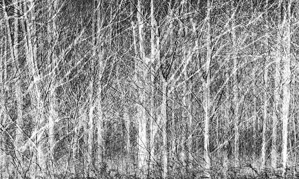 forest, inverted